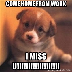 cute puppy - come home from work i miss u!!!!!!!!!!!!!!!!!!!