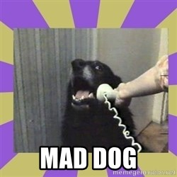 Yes, this is dog! -  mad dog