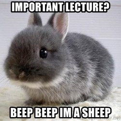 ADHD Bunny - Important lecture? Beep beep im a sheep