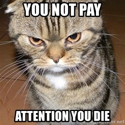 angry cat 2 - you not pay attention you die