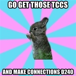 yAy FoR LifE BunNy - Go get those TCCs and make connections D240