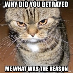 angry cat 2 - why did you betrayed  me what was the reason