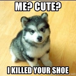 Baby Courage Wolf - ME? cute?  i killed your shoe