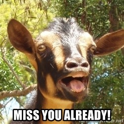 Illogical Goat -  miss you already!