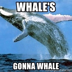 whaleeee - whale's gonna whale