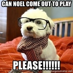 hipster dog - Can Noel come out to play Please!!!!!!