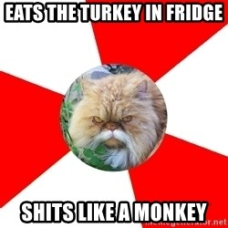 Diabetic Cat - eats the turkey in fridge shits like a monkey