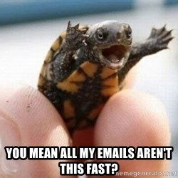 angry turtle -  You mean all my emails aren't this fast?