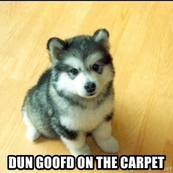 Baby Courage Wolf -  dun goofd on the carpet