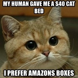 Do you think this is a motherfucking game? - My human gave me a $40 cat bed I prefer amazons boxes