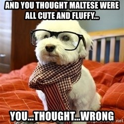 hipster dog - And you thought Maltese were all cute and fluffy... You...thought...wrong