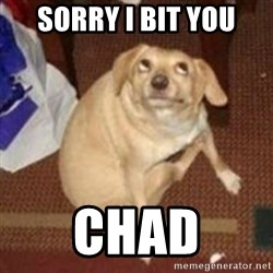Oh You Dog - sorry i bit you chad