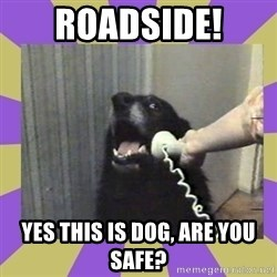Yes, this is dog! - ROADSIDE!  YES THIS IS DOG, ARE YOU SAFE?