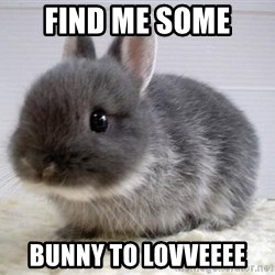 ADHD Bunny - Find me some  Bunny to lovveeee