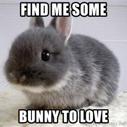 ADHD Bunny - Find me some  Bunny to love