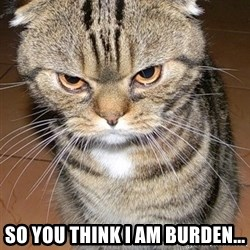angry cat 2 -  So YOU THINK I AM BURDEN...