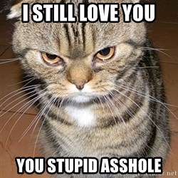 angry cat 2 - I still love you You stupid asshole