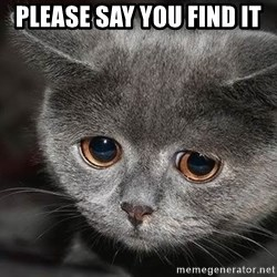 sad cat - pLEASE SAY YOU FIND IT