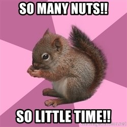 Shipper Squirrel - So Many Nuts!! So Little time!!
