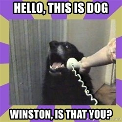 Yes, this is dog! - Hello, This is dog Winston, is that you?