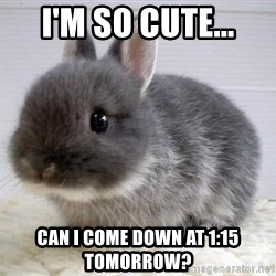 ADHD Bunny - I'm so cute... CAn I come down AT 1:15 tomorrow?