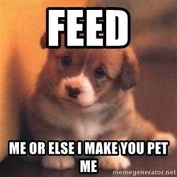 cute puppy - Feed  me or else I make you pet me