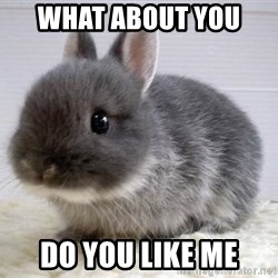 ADHD Bunny - What about you  Do you like me