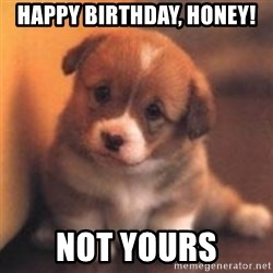 cute puppy - Happy Birthday, Honey! Not yours