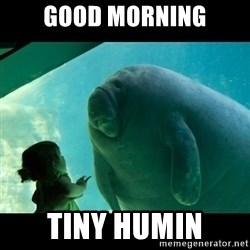 Overlord Manatee - Good Morning Tiny humin