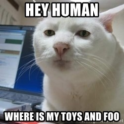 Serious Cat - Hey human Where is my toys and foo