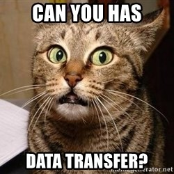 Serious Cat - Can you has Data Transfer?