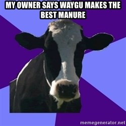 Coworker Cow - My owner Says Waygu Makes the Best Manure