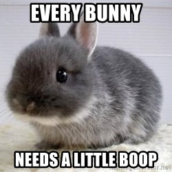 ADHD Bunny - Every bunny Needs a little boop