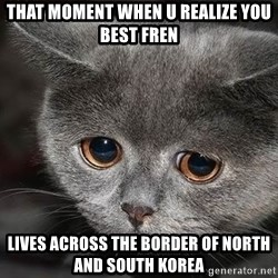sad cat - That moment when u realize you best fren LIVES ACROSS the border of north and south Korea