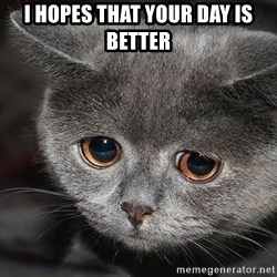 sad cat - I hopes that your day is better