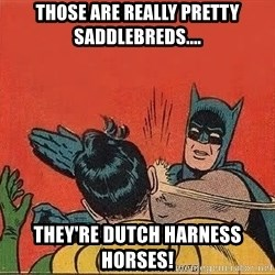 batman slap robin - those are really pretty saddlebreds.... they're dutch harness horses!
