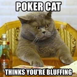 Poker Cat - Poker cat Thinks you're bluffing