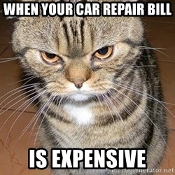 angry cat 2 - When your car repair bill  Is expensive
