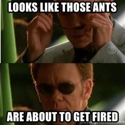 Csi - looks like those ants are about to get fired