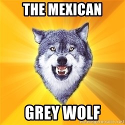 Courage Wolf - The mexican grey wolf