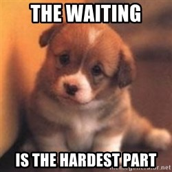 cute puppy - the waiting is the hardest part