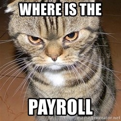 angry cat 2 - where is the  payroll