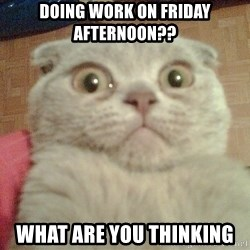 GEEZUS cat - DOING WORK ON FRIDAY AFTERNOON?? WHAT ARE YOU THINKING