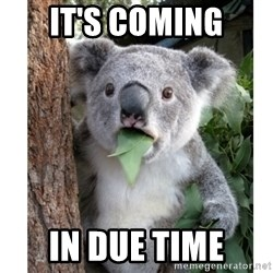 surprised koala - It's coming In due time