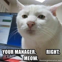 Serious Cat -  your manager.           right. meow.