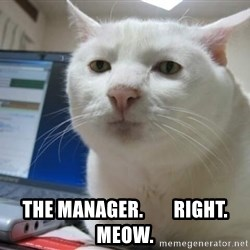 Serious Cat -  the manager.        right. meow.