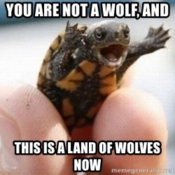 angry turtle - YOU ARE NOT A WOLF, AND  This is a land of wolves now