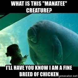 "Overlord Manatee - what is this ""manatee"" creature? i'll have you know i am a fine breed of chicken"