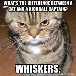 angry cat 2 - what's the difference between a cat and a kickball captain? whiskers.