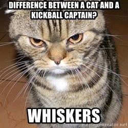angry cat 2 - Difference between a cat and a kickball captain? Whiskers